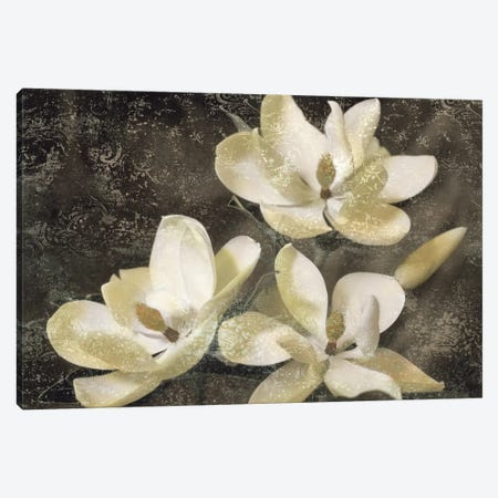 The Magnolia Tree Canvas Print #JOH107} by John Seba Canvas Art Print