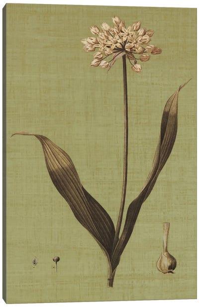 Botanica Verde III Canvas Print #JOH10