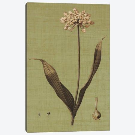 Botanica Verde III Canvas Print #JOH10} by John Seba Canvas Print