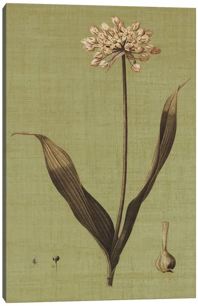 Botanica Verde III Canvas Art Print