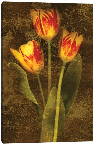 Three Tulips Canvas Art Print