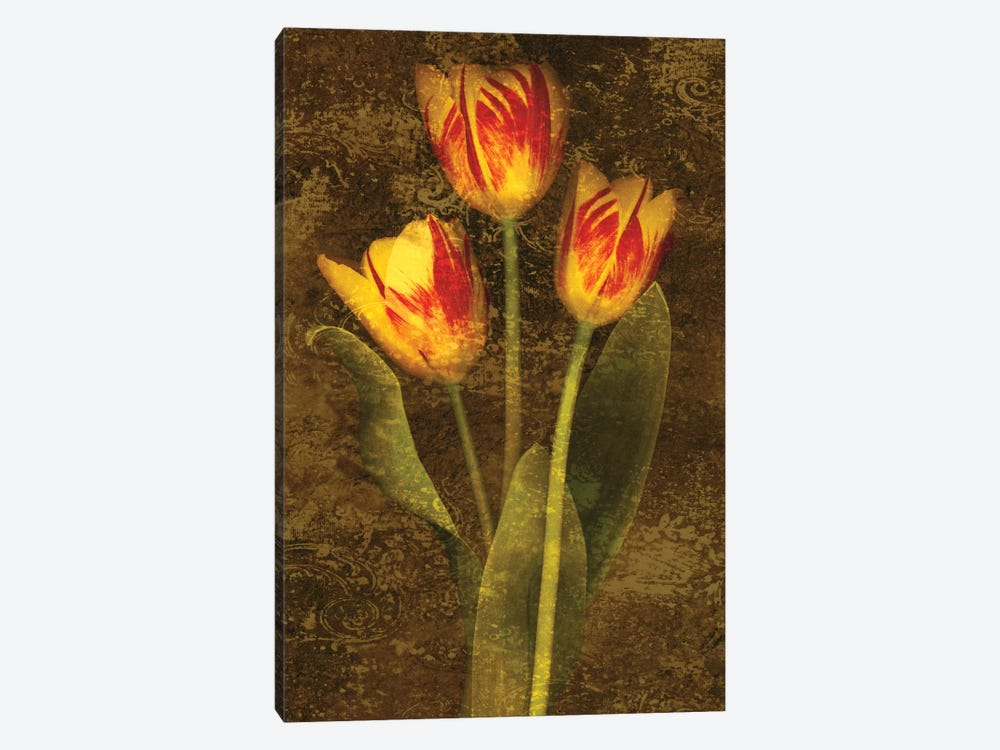 Three Tulips by John Seba 1-piece Canvas Wall Art