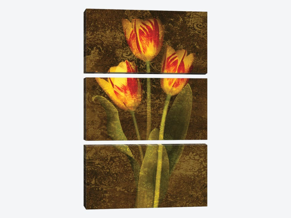 Three Tulips by John Seba 3-piece Canvas Art