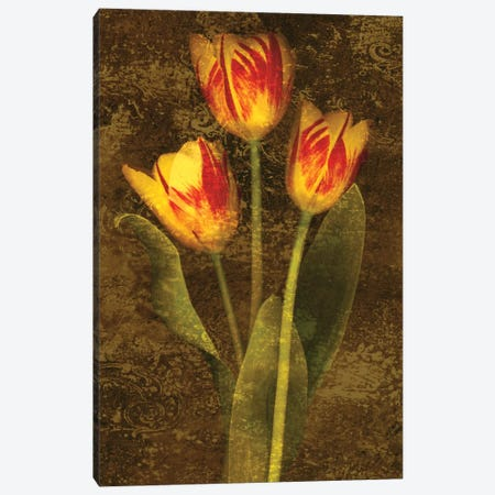 Three Tulips Canvas Print #JOH111} by John Seba Canvas Art Print