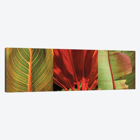 Tropical Treasure I Canvas Print #JOH114} by John Seba Canvas Wall Art