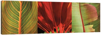 Tropical Treasure I Canvas Print #JOH114