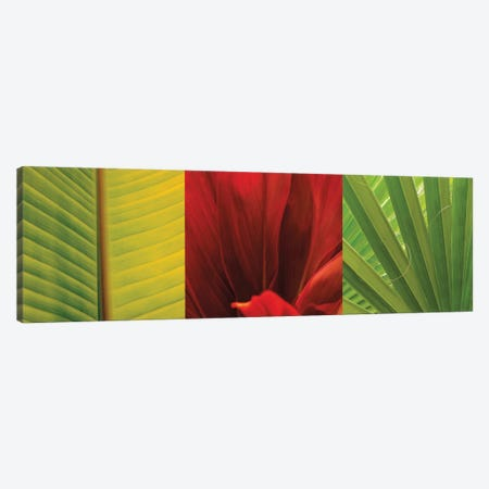 Tropical Treasure II Canvas Print #JOH115} by John Seba Canvas Artwork