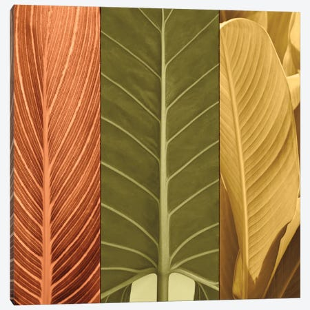 Tropical Trio I Canvas Print #JOH116} by John Seba Canvas Artwork