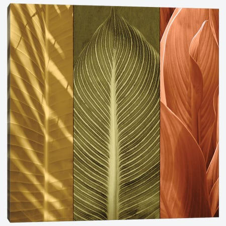 Tropical Trio II Canvas Print #JOH117} by John Seba Canvas Art
