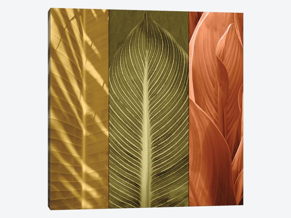 Tropical Trio II by John Seba 1-piece Canvas Art
