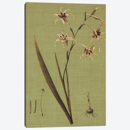 Botanica Verde IV Canvas Print #JOH11} by John Seba Canvas Art Print