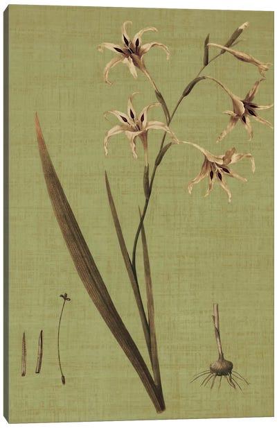 Botanica Verde IV Canvas Print #JOH11
