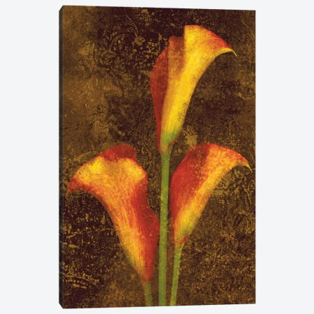 Callas Canvas Print #JOH12} by John Seba Canvas Print