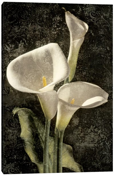 Callas I Canvas Art Print