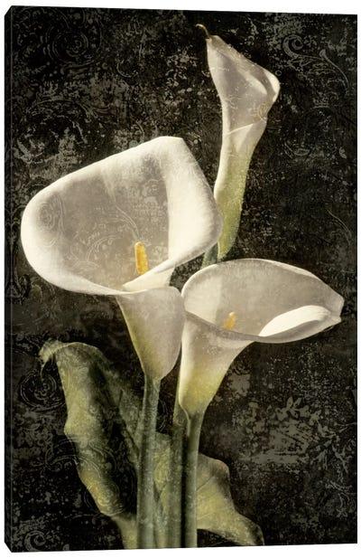 Callas I Canvas Art Print