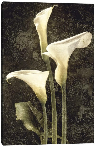 Callas II Canvas Art Print