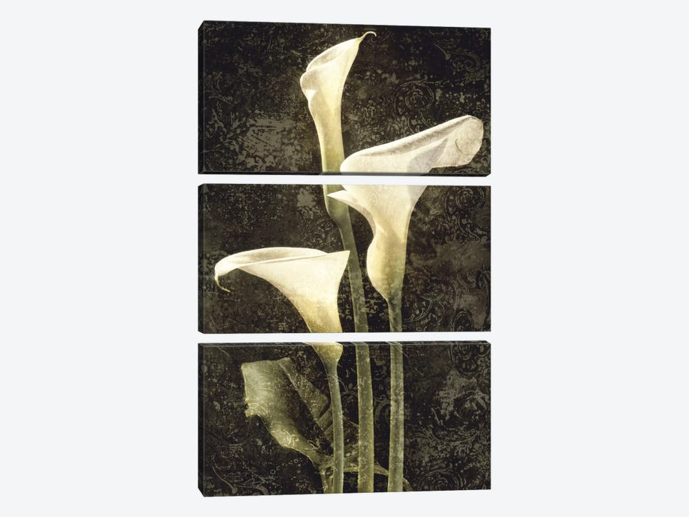 Callas II by John Seba 3-piece Canvas Wall Art