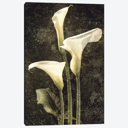 Callas II Canvas Print #JOH14} by John Seba Canvas Wall Art