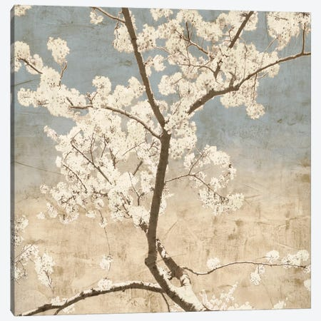 Cherry Blossoms I Canvas Print #JOH18} by John Seba Art Print