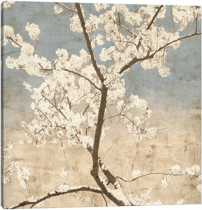 Cherry Blossoms I Canvas Art Print