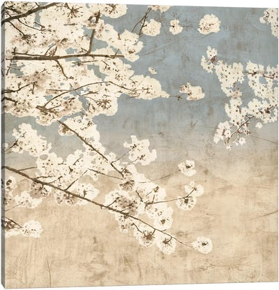 Cherry Blossoms II Canvas Art Print