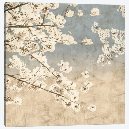 Cherry Blossoms II Canvas Print #JOH19} by John Seba Art Print