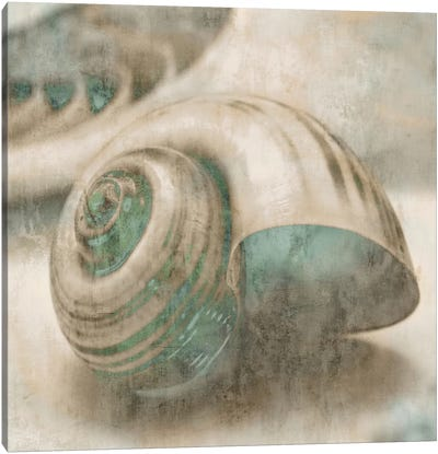 Coastal Gems II Canvas Art Print