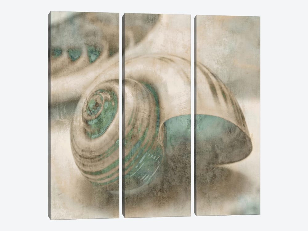 Coastal Gems II by John Seba 3-piece Canvas Artwork