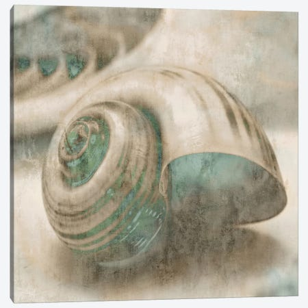 Coastal Gems II Canvas Print #JOH21} by John Seba Canvas Art