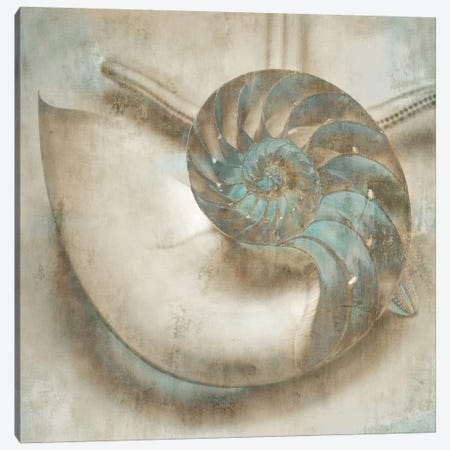 Coastal Gems IV Canvas Print #JOH23} by John Seba Canvas Wall Art
