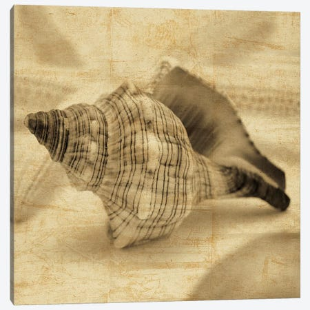 Conch Canvas Print #JOH24} by John Seba Art Print