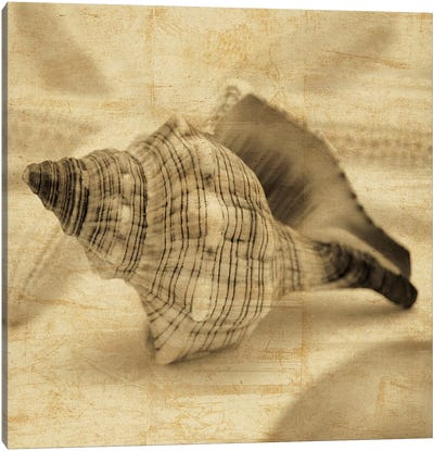 Conch Canvas Art Print