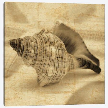 Conch Canvas Print #JOH24} by John Seba Art Print