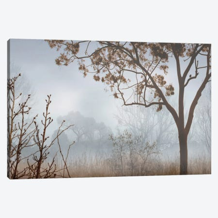 Early Morning Mist I Canvas Print #JOH29} by John Seba Canvas Wall Art