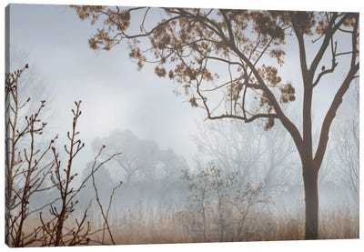 Early Morning Mist I Canvas Art Print