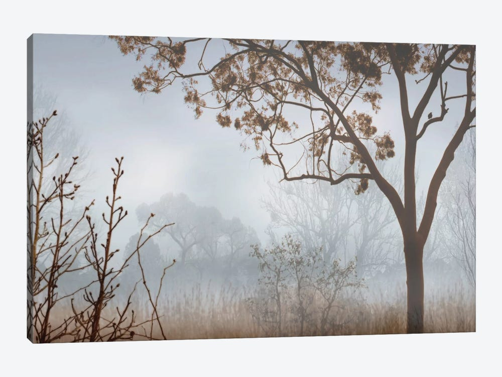 Early Morning Mist I 1-piece Canvas Artwork