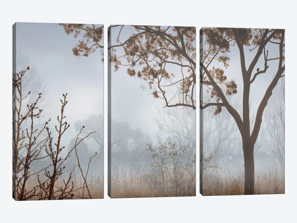 Early Morning Mist I 3-piece Canvas Wall Art