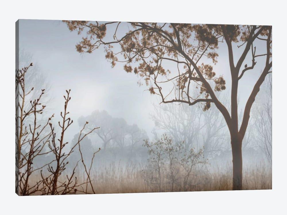 Early Morning Mist I by John Seba 1-piece Canvas Artwork