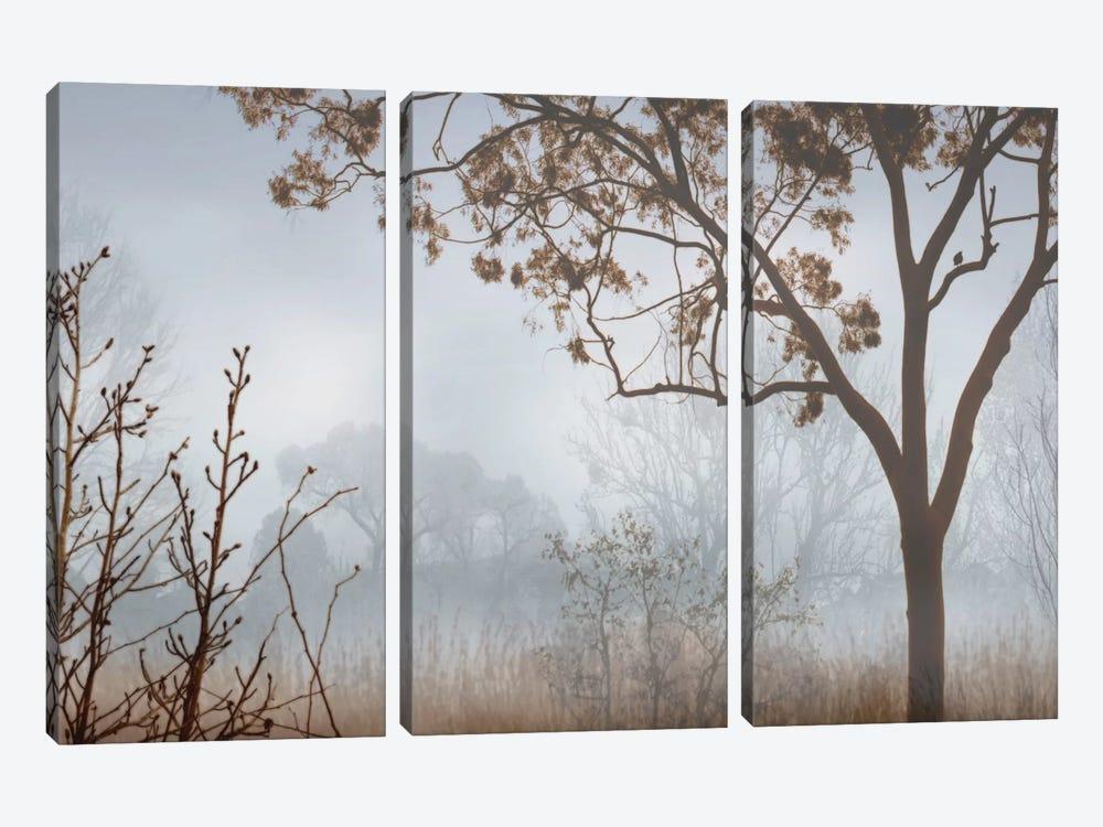 Early Morning Mist I by John Seba 3-piece Canvas Wall Art