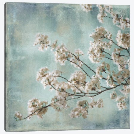 Aqua Blossoms I Canvas Print #JOH2} by John Seba Canvas Art