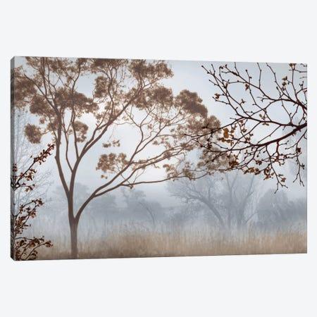 Early Morning Mist II Canvas Print #JOH30} by John Seba Art Print