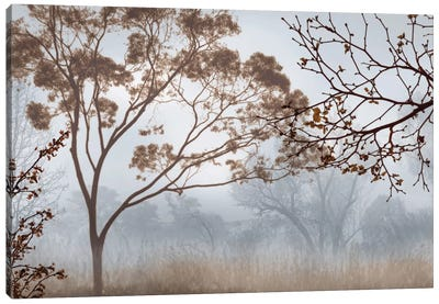 Early Morning Mist II Canvas Art Print