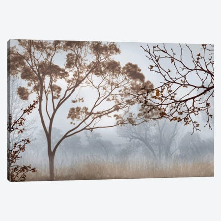 Early Morning Mist II Canvas Print #JOH30} by John Seba Art Print