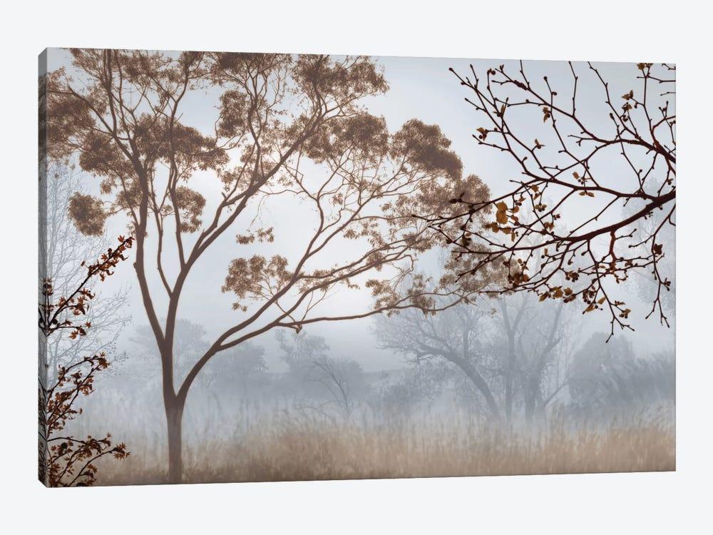 Early Morning Mist II by John Seba 1-piece Canvas Art