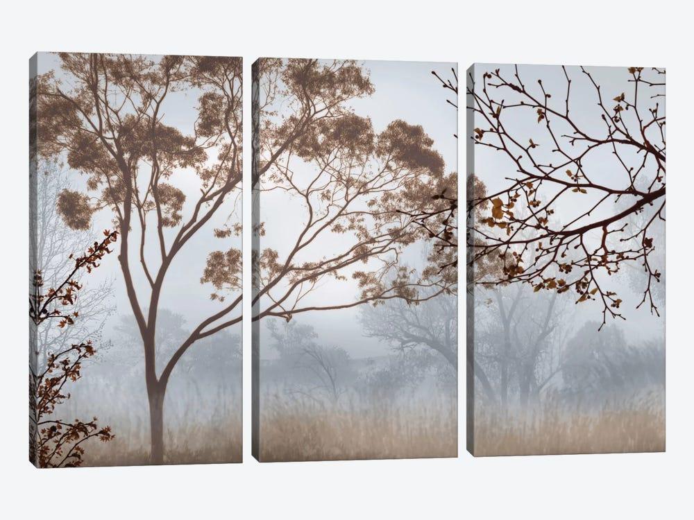 Early Morning Mist II by John Seba 3-piece Canvas Wall Art
