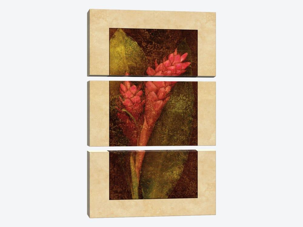 Ginger by John Seba 3-piece Canvas Print