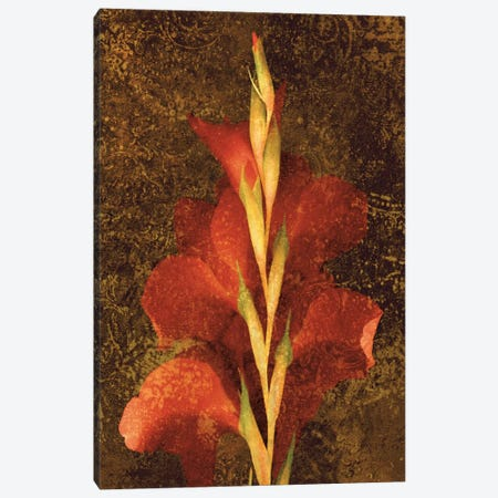 Gladiola Canvas Print #JOH32} by John Seba Art Print
