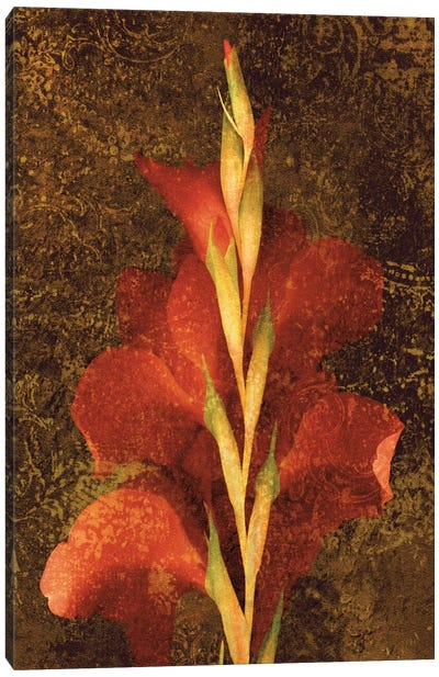 Gladiola Canvas Print #JOH32