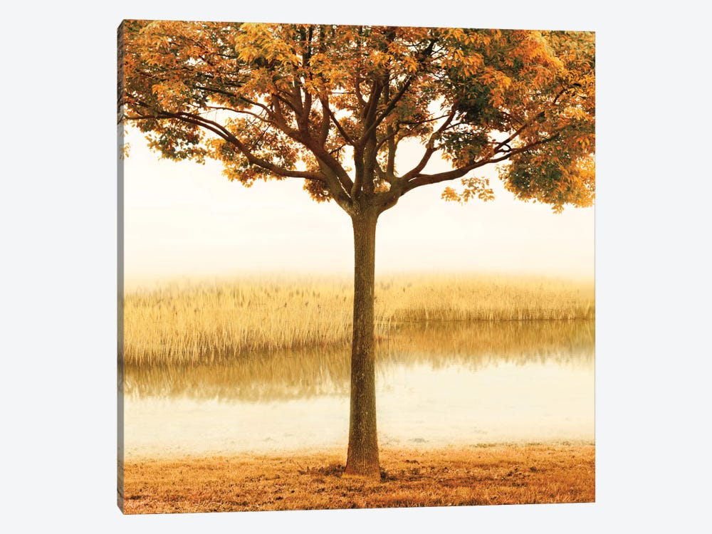 Golden Morning I by John Seba 1-piece Canvas Print