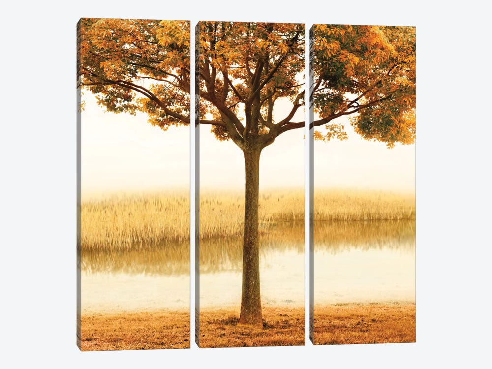 Golden Morning I by John Seba 3-piece Canvas Print